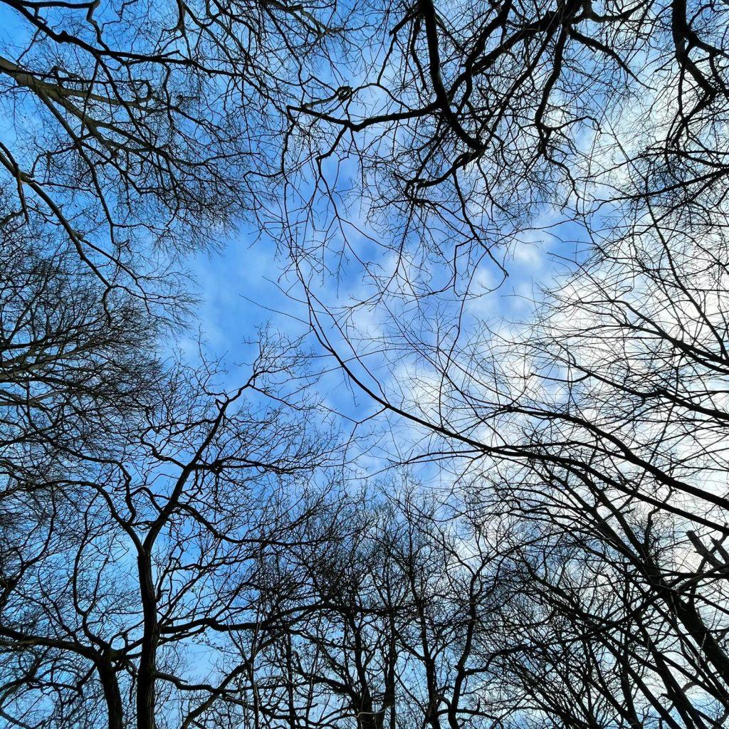 Natuur, blauwe lucht, TRE, Adem Coaching, Creatief Kunstzinnige begeleiding en Retreats